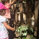 Rancho Avellanas Farm